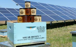 Saving the bees with solar farms