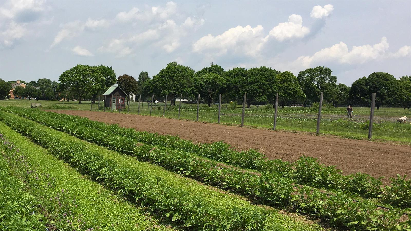 Chef Tom Schaudel to offer farm-to-table recipes for Homecoming Farm event