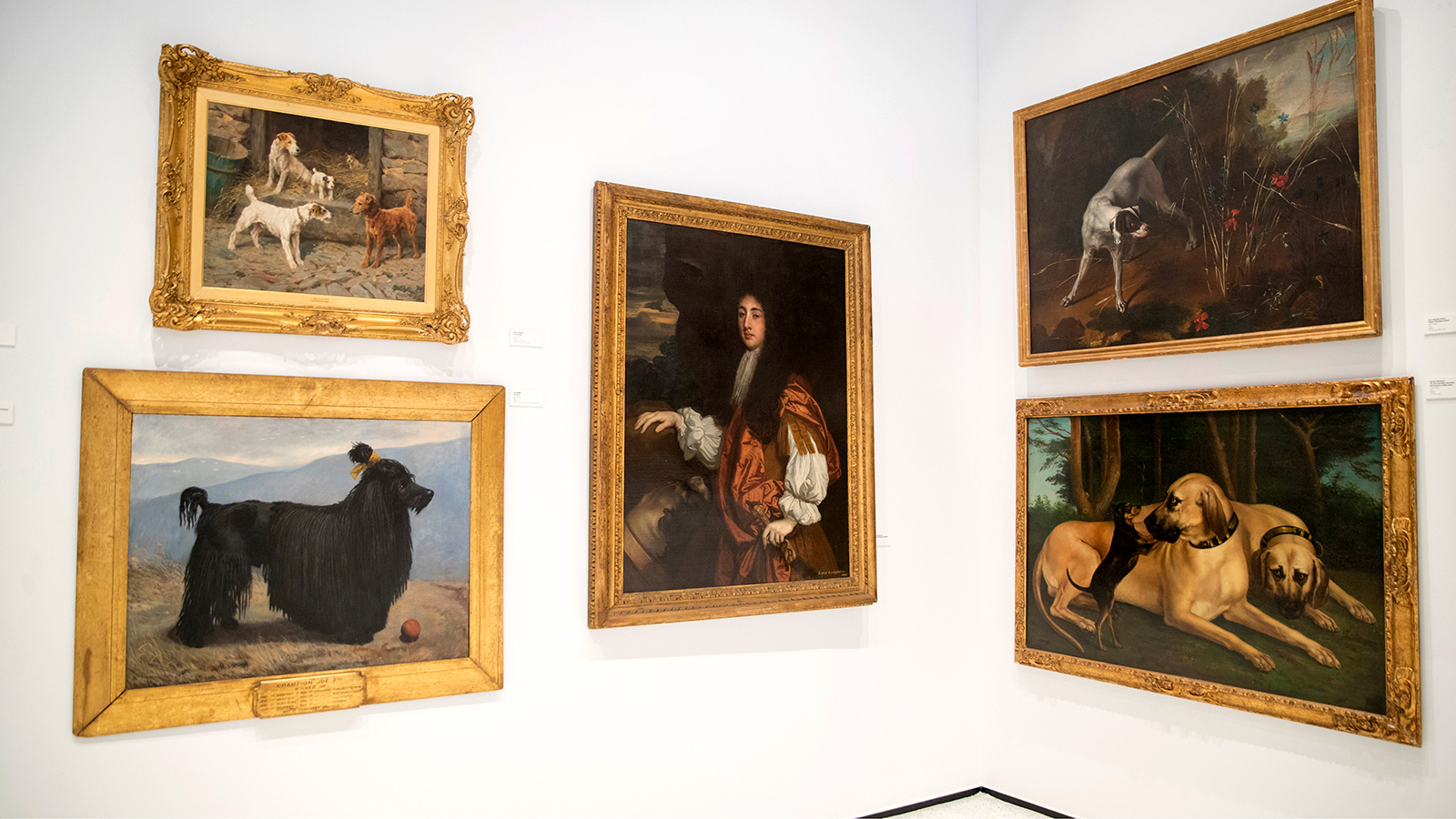 New York unleashes new dog museum