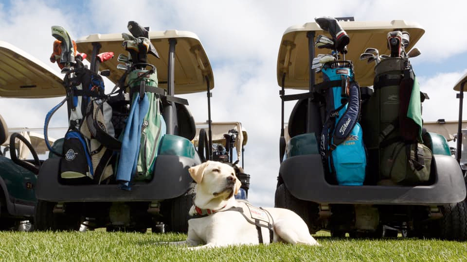 Service dog Sully visits VetDogs golf outing