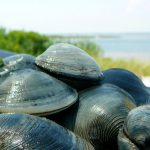 Funding helps researchers clam up
