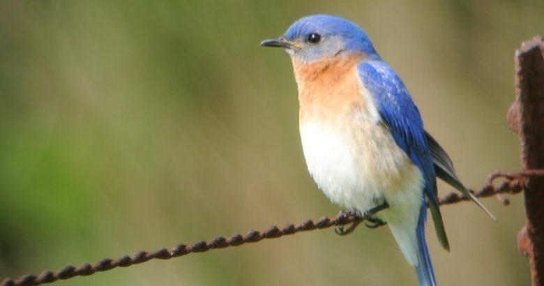 Virtual birding takes wing on Long Island
