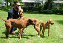 Rebranded pet business adding doggie daycare