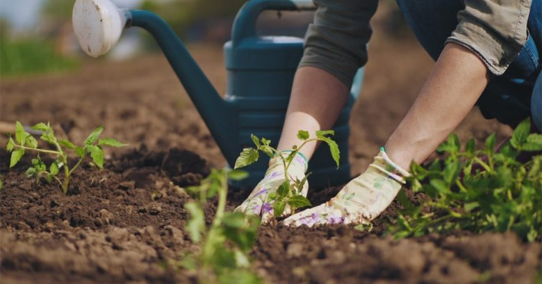 $10K grant from TD Bank helps grow FREEdom Garden