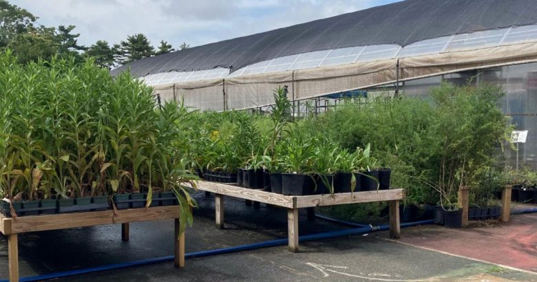 New nursery and seed facility opens in Brentwood