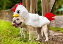 Country Fair to host Paws for a Cause